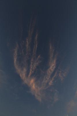 20101201img_4528